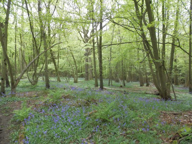 Bredhurst Woods Local Wildlife Site