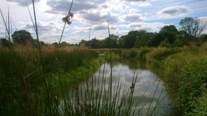 Wetland at Newlands Farm