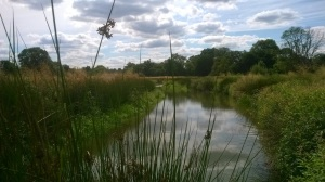 Wetland at Newlands Farm