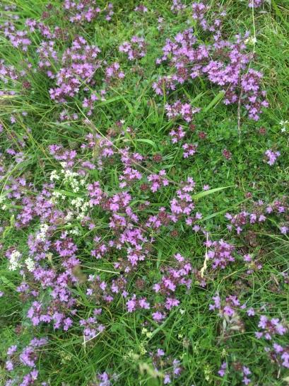 Lake District flowers