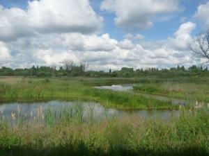 Newlands Reedbed at Brandon Marsh Nature Reserve