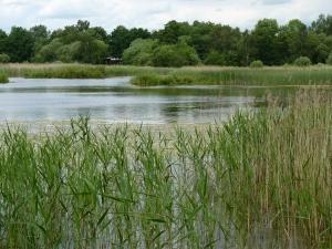 Looking across Willow Marsh