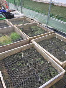 Vole-proof seed beds