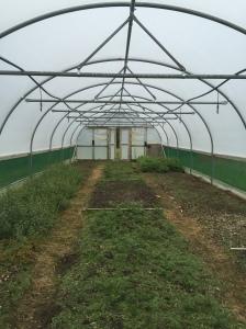 Little Assynt seed nursery seed beds