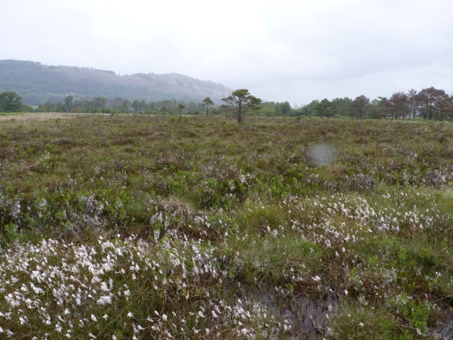 Looking across the oldest part of Foulshaw Moss