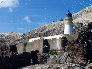 Bass Rock lighthouse with gannet breeding colony