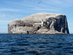 Bass Rock, off the Scottish coast, is Europes largest gannet colony