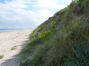 sand dune 2 Drurridge