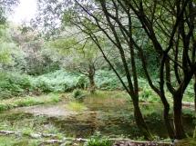 Settling pond at Gwaith Powdwr