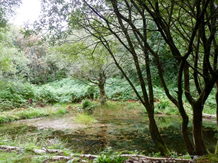 Settling pond at Gwaith Powdwr