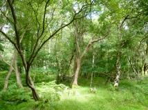 Woodland at Gwaith Powdwr