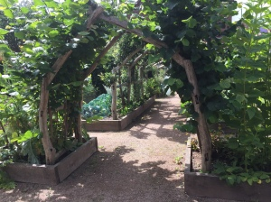 The edible arch at The Cut, Abbey Foregate, one of Shropshire Wildlife Trust's visitor centres.