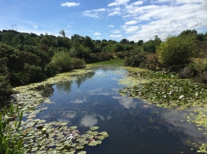 One of the large ponds at Bissoe Valley Nature Reserve
