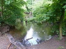 A shady woodland pond