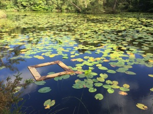 Terrapin trap in a lily pond at Bystock