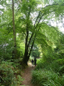 Walking through The Copse at Bystock nature reserve