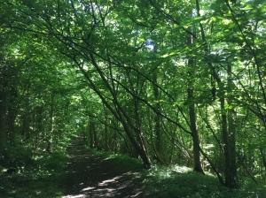 Folly wood, Avon Wildlife Trust
