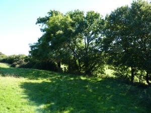Folly farm meadow